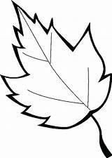 Coloring Leaf Leaves Printable Pages Oak Marijuana Maple Holly Sugar Template Sheet Leafs Printables Drawing Getcolorings Clipartmag Getdrawings Weed Templates sketch template