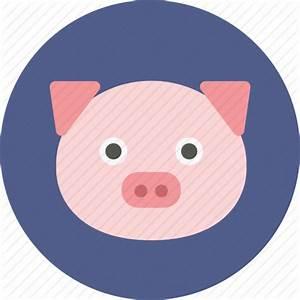 Cute Pig Png