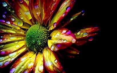 Random Fanpop Rain Flowers Colorful Background Flower
