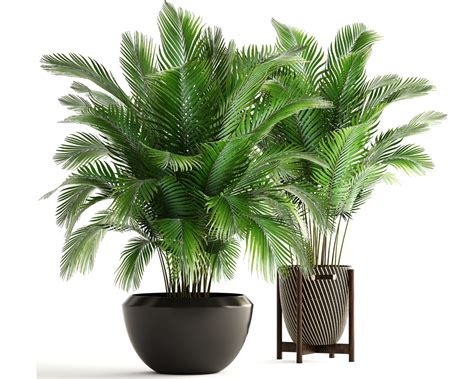 piante ufficio piante ufficio ossigeno pianta sansevieria benefici e