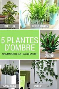 Plantes D Ombre Extérieur : 5 plantes vertes d 39 ombre pour l 39 int rieur jardinage et ~ Melissatoandfro.com Idées de Décoration