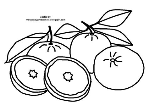 mewarnai gambar mewarnai gambar sketsa buah jeruk 2