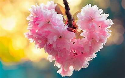 Flowers Hearts Wallpapers Backgrounds Nature Phone Plant