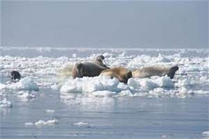 A Vitesse Grand V : la banquise arctique fond vitesse grand v ~ Medecine-chirurgie-esthetiques.com Avis de Voitures