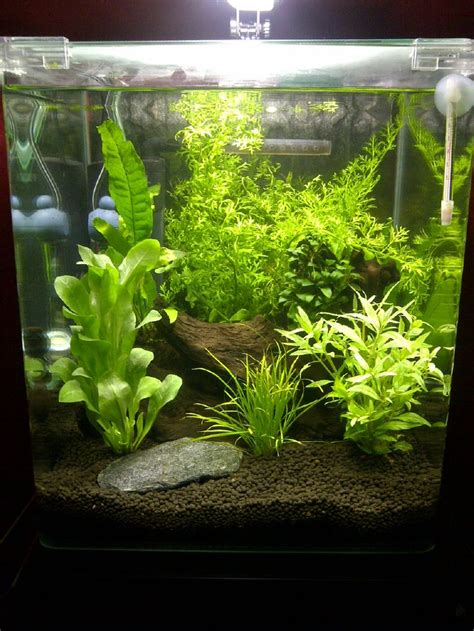 aquascaping planted tank aquascape jpg 7 9 gal this would make a great tank for a