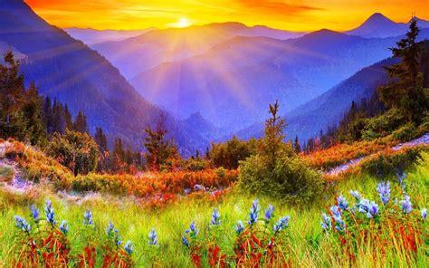 nature landscape flowers wallpapers hd desktop