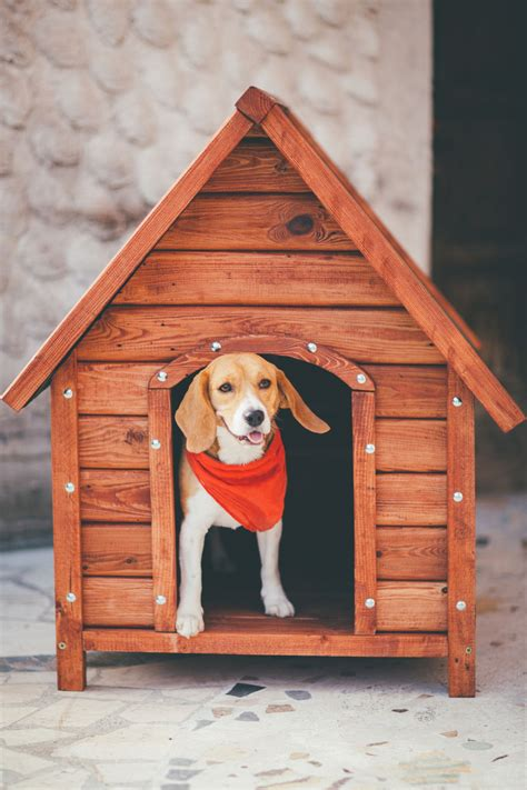 visual guide    build  dog house   simple steps
