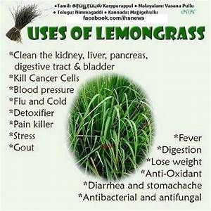 Lemon Grass for a Zesty Flavoring or an Herbal Medicine ...