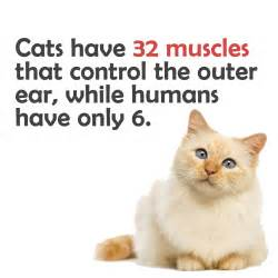 things to about cats cat facts 33 things about cats you didn t