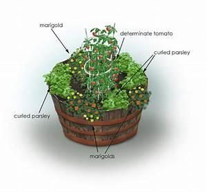 Parsley  U0026 Tomato Container Garden
