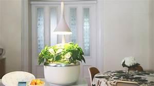 sproutsio an mit born tiny indoor garden can grow With katzennetz balkon mit indoor grow garden