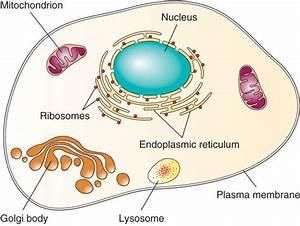 Basic Biology  Anatomy  And Physiology  U2013 Human Nutrition  Deprecated