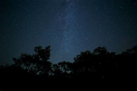Free Images Nature Forest Sky Night Star Milky Way