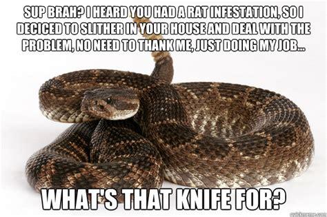 Snake Meme The Gallery For Gt Spider Snake
