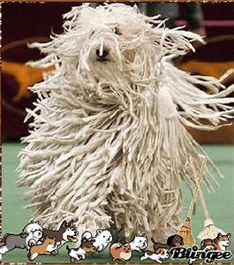 DOG/MOP???? Picture #129036092 | Blingee.com