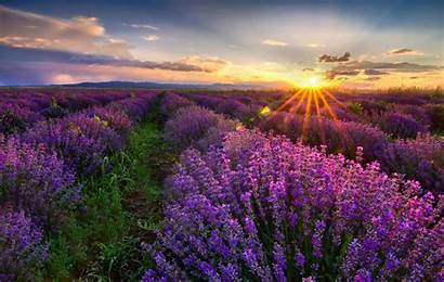 Nature Desktop Background Cool Wallpapers Backgrounds Flowers