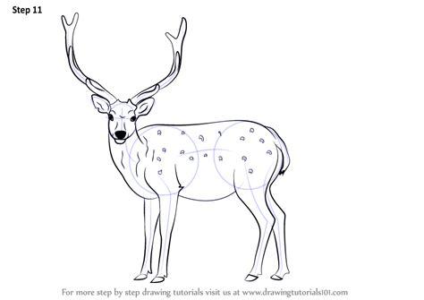 step  step   draw  sika deer drawingtutorialscom