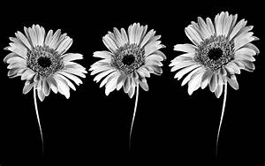 Flower Black And White Clip Art Flowers Clipart 8 ~ Clipgoo