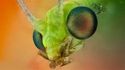 Head Insect Wallpapers Animals