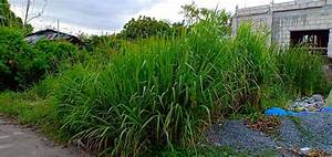 Lot For Sale In Batong Dalig Kawit Cavite