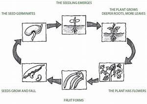 Diagram Of A Flower 2nd Grade