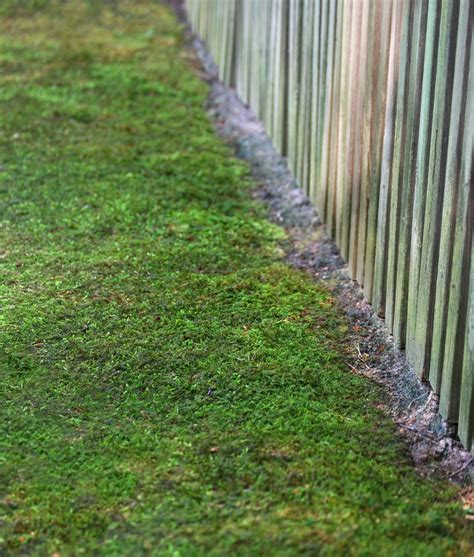 growing moss lawn how to grow moss moss and stone gardens