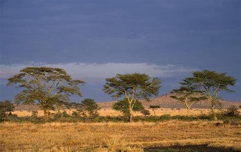 africa wide great green wall  halt saharas spread
