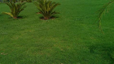 Field Grass Plantation Manufacturer In Delhi India By Anil