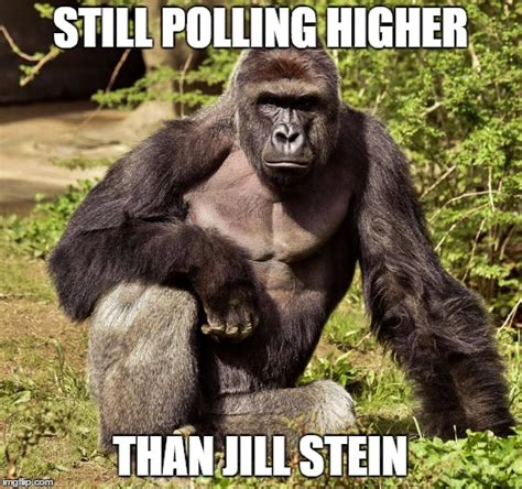 Jill Stein Memes - not bad for a corpse the ape is doing good too imgflip