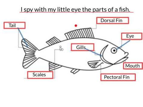 Parts Of A Fish Youtube
