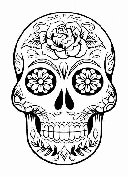 Skull Flowers Drawing Ink Face Drawn Leaves