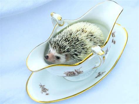 Gravy Boat Animal by Hedgehog In Gravy Boat C U T E N E S S Pinterest