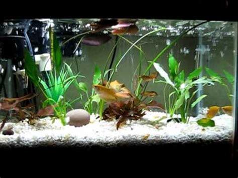 diy  aquarium  filtration  gravel  crystal