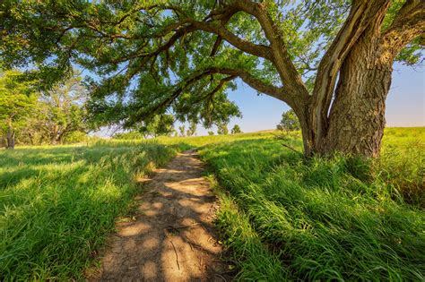 Trunk, Trail, Grass, Tree Nature, Hd Landscape Images