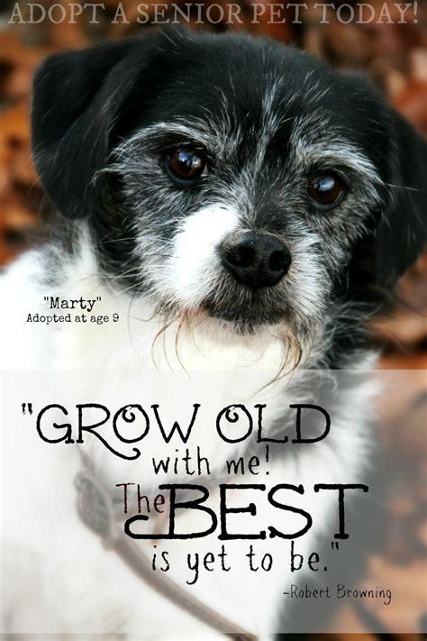 dog adoption quotes quotesgram