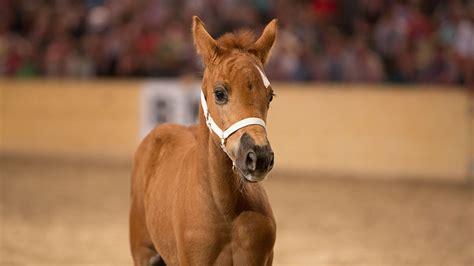 süße pferde bilder bea 2019 pferd