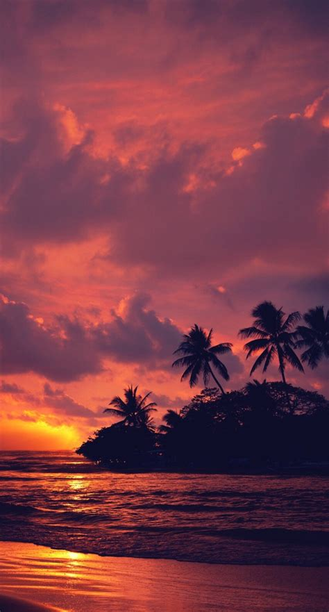 nature landscape water clouds trees beach sunset