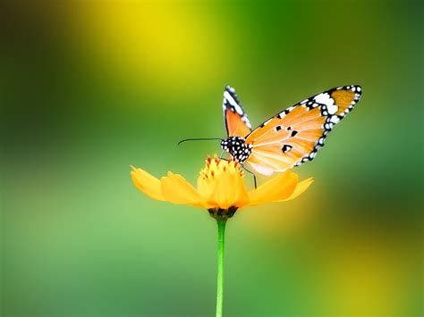 3d Animal Wallpaper For Mobile - animals nature butterfly wallpapers hd desktop and