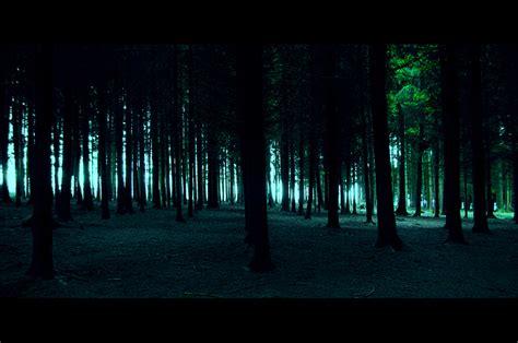 Dunkler Wald Foto & Bild