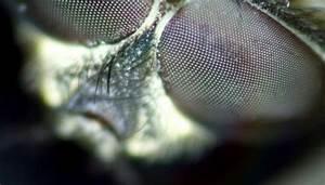Diagram Of Housefly