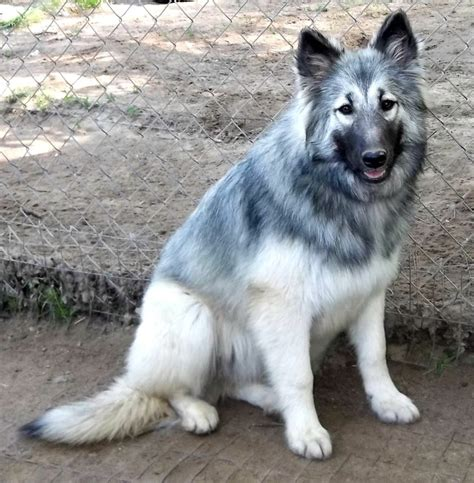 native american indian dog breederspet  gallery dog pet  galleryrmopxzpnk