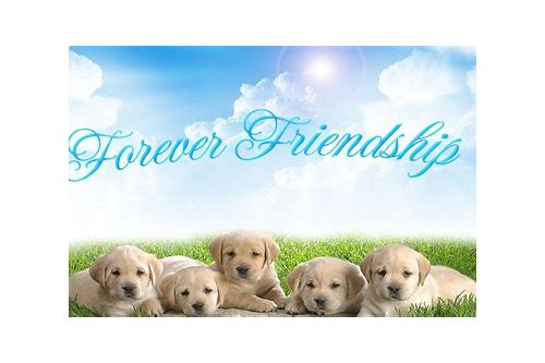 friendship quotations wallpapers free download