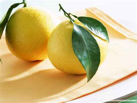 Lemon Wallpaper by Fruits Wallpapers Desktop Wallpapers