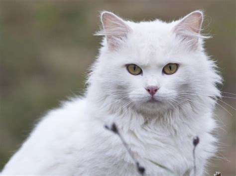 The Most Visually Stunning Cat Breeds