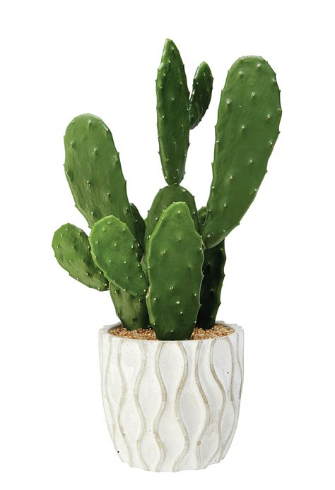 10 Ways Work Cactus Trend by Cool Cactus Style