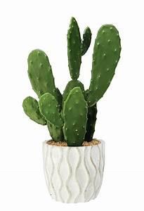 Pot A Cactus : cool cactus style ~ Farleysfitness.com Idées de Décoration