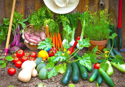 Vegetable Home Garden Plans For Beginner Gardener Roy