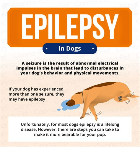 seizures in dogs epilepsy in dogs signs symptoms treatment canna pet