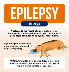 epilepsy dogs signs symptoms treatment