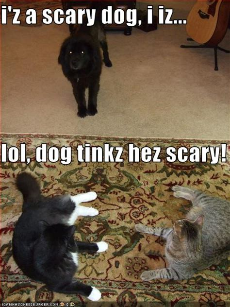 iz  scary dog  iz lol dog tinkz hez scary